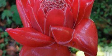 Perù 3. Un fiore