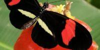 Farfalle e pattumieristi